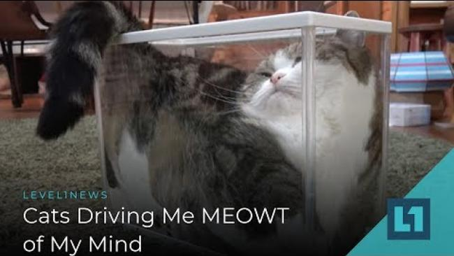 Embedded thumbnail for Level1 News February 8 2019: Cats Driving Me MEOWT of My Mind