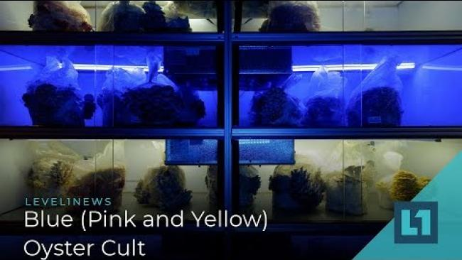 Embedded thumbnail for Level1 News February 22 2019: Blue (Pink and Yellow) Oyster Cult